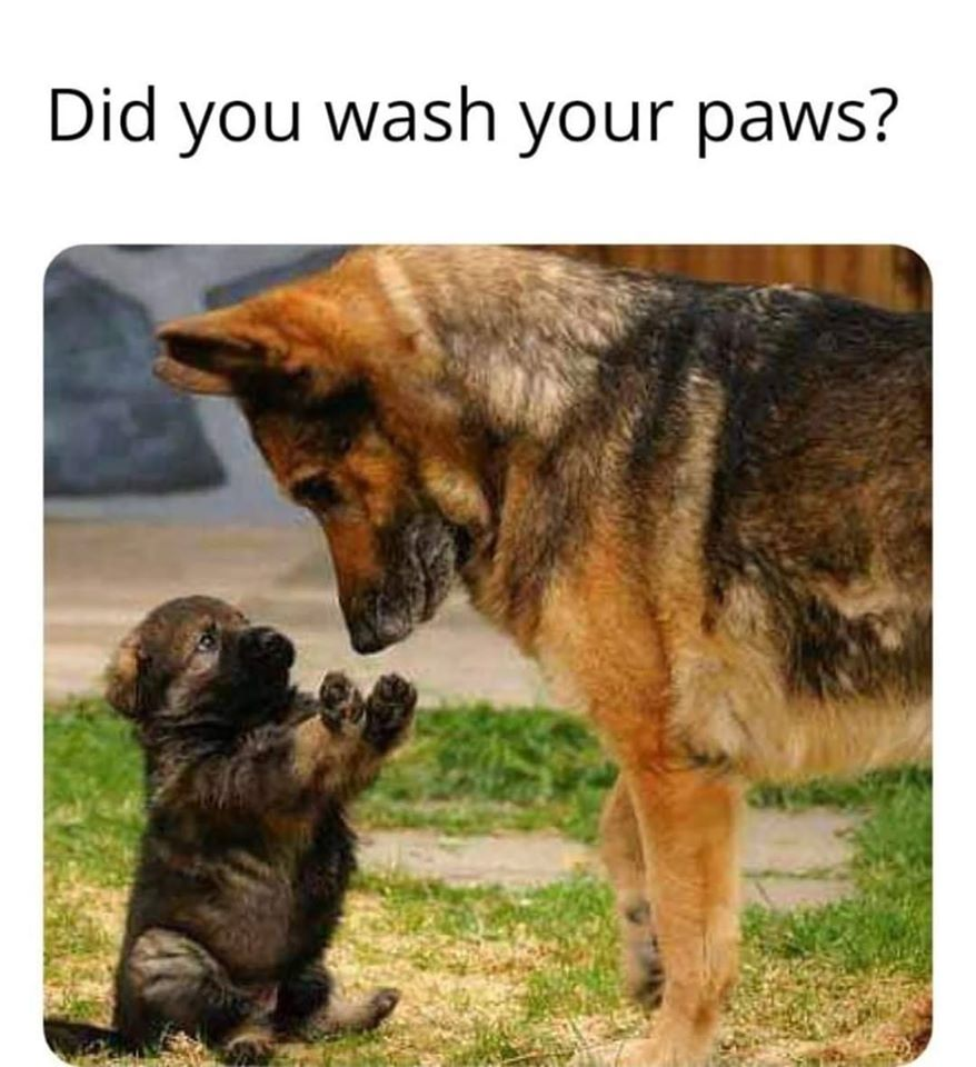 did you wash you paws